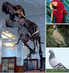 κόκαλο δεινόσαυρος που χρονολογείταιpriser på ιστοσελίδες γνωριμιών